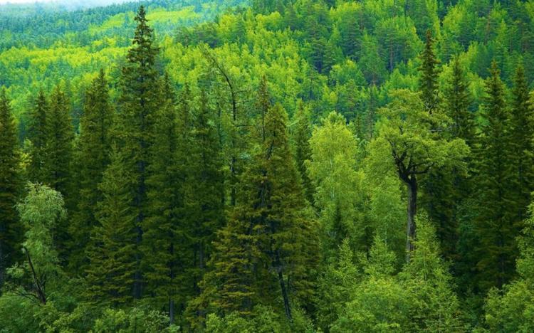 Солтүстік Қазақстанның Айыртау ауданында 48 гектар орман оталмақ