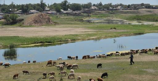 Ауыл тұрғындарының төрт-түлігіне 29 млн гектар жайылым жетіспейді